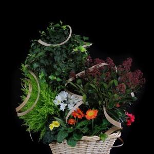 Deuils - Coupe de plante 150€